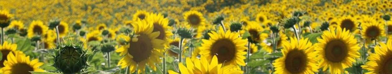 Agriturismo Farmhouse CA' STANGA